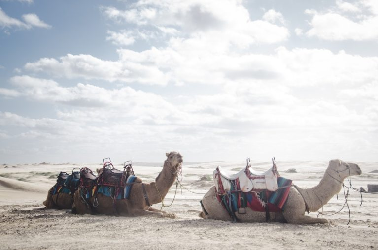 A Camel Through the Eye of a Needle, and Other Wild Tales of